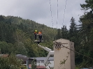2020-08-31 Baum in Stromleitung